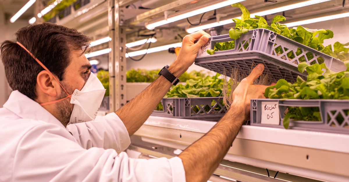 LettUs Grow and Harper Adams partner to bring the benefits of vertical farming to greenhouses
